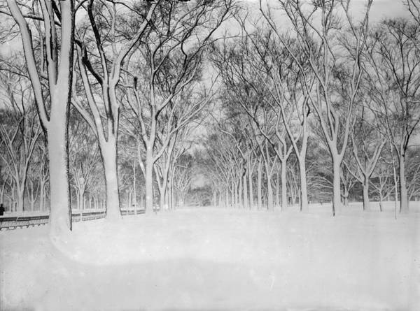 Solarized Photograph - New York City, The Mall, Central Park by Everett