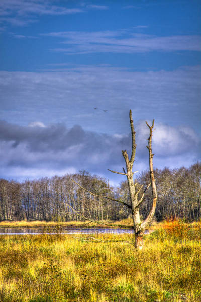 Photograph - Nisqually Wildlife Refuge P14 by David Patterson