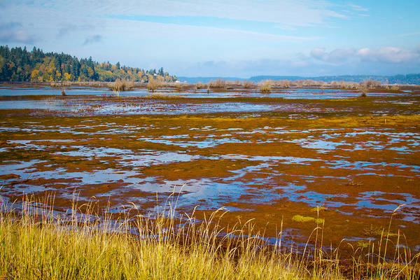 Photograph - Nisqually Wildlife Refuge P15 by David Patterson