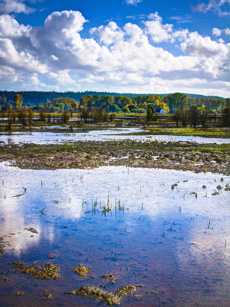 Photograph - Nisqually Wildlife Refuge P17 by David Patterson