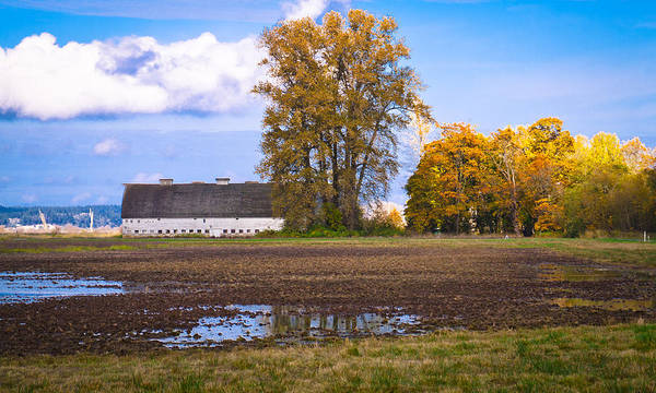 Photograph - Nisqually Wildlife Refuge P19 by David Patterson