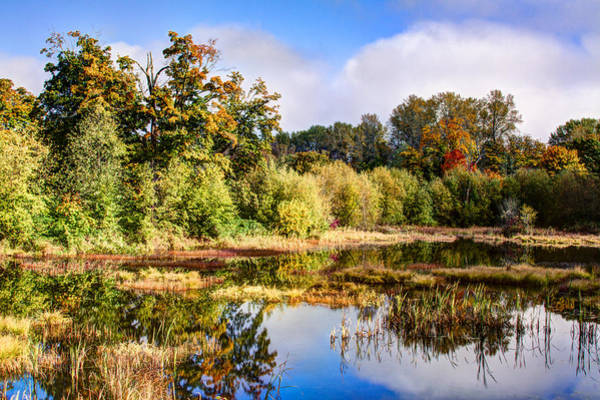 Photograph - Nisqually Wildlife Refuge P2 by David Patterson
