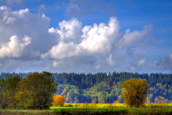 Photograph - Nisqually Wildlife Refuge P20 by David Patterson
