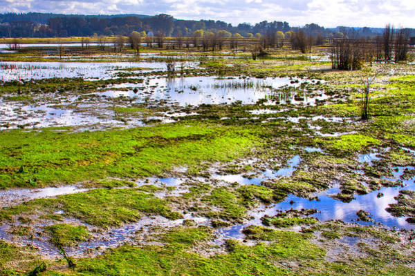 Photograph - Nisqually Wildlife Refuge P23 by David Patterson