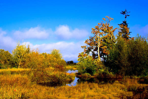 Photograph - Nisqually Wildlife Refuge P25 by David Patterson
