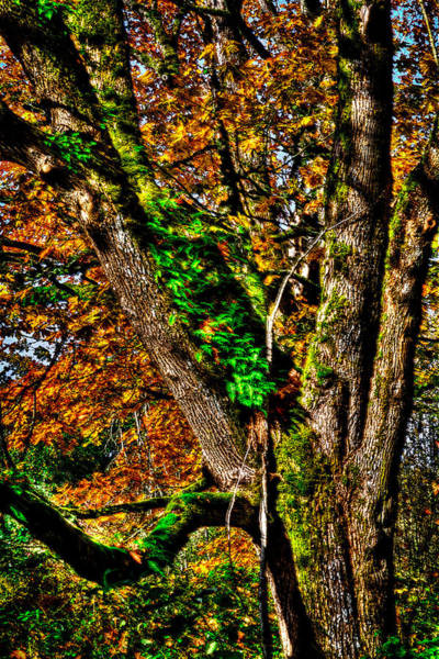 Photograph - Nisqually Wildlife Refuge P27 by David Patterson