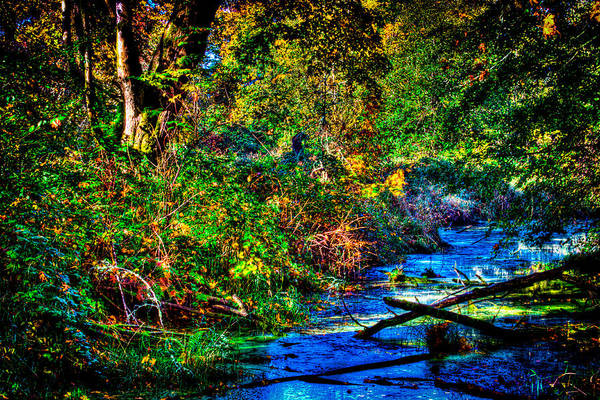 Photograph - Nisqually Wildlife Refuge P28 by David Patterson