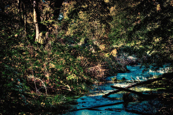Photograph - Nisqually Wildlife Refuge P28a by David Patterson