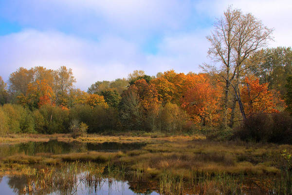 Photograph - Nisqually Wildlife Refuge P3 by David Patterson