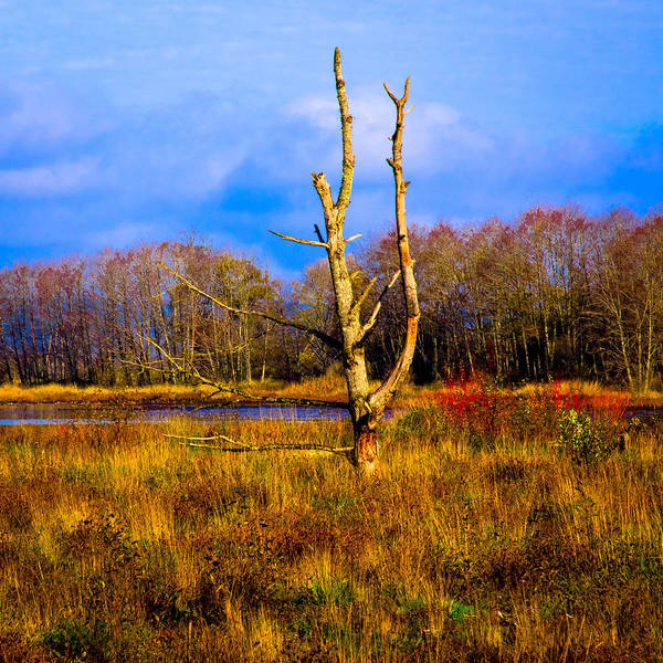 Photograph - Nisqually Wildlife Refuge P32 by David Patterson