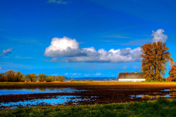 Photograph - Nisqually Wildlife Refuge P35 by David Patterson