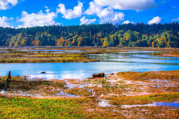 Photograph - Nisqually Wildlife Refuge P36 by David Patterson