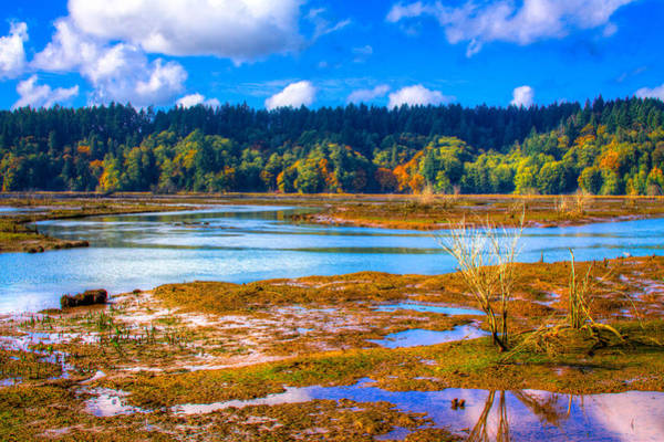 Photograph - Nisqually Wildlife Refuge P37 by David Patterson