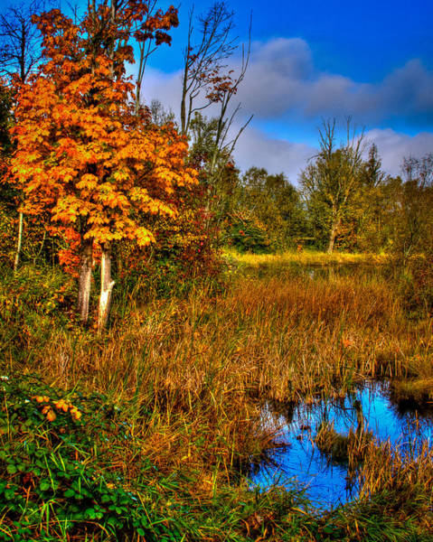 Photograph - Nisqually Wildlife Refuge P40 by David Patterson