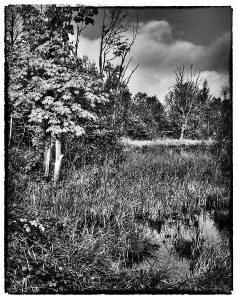 Photograph - Nisqually Wildlife Refuge P40a by David Patterson