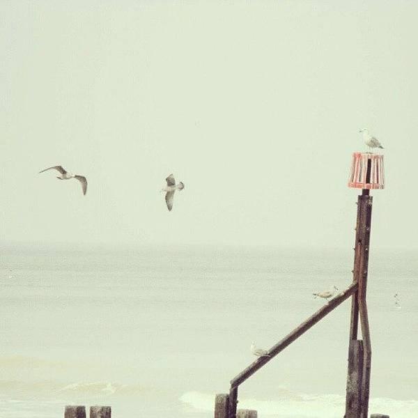 Norfolk Photograph - #norfolk #seagulls... #latergram #birds by Alexandra Cook