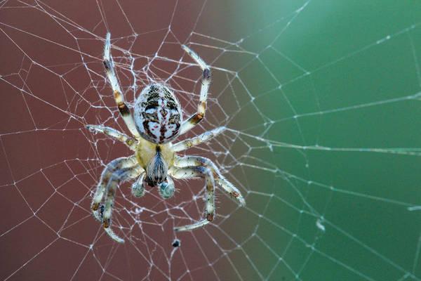 Christy Photograph - North Dakota Spider by Christy Patino