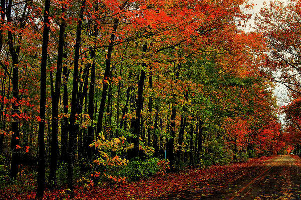 Photograph - Northern Michigan Autumn 5 by Scott Hovind