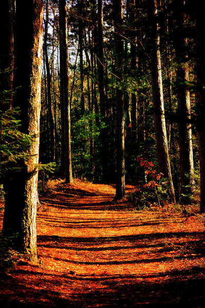 Photograph - Northern Michigan Forest 2 by Scott Hovind