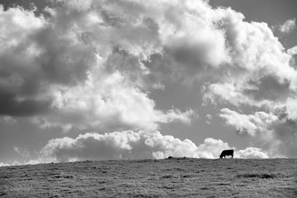 Big Sky Photograph - Not A Cow In The Sky - Black And White by Peter Tellone