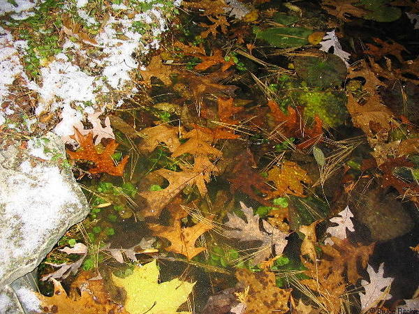 Mixed Media - Oak Leaves Under Ice 2 by Bruce Ritchie
