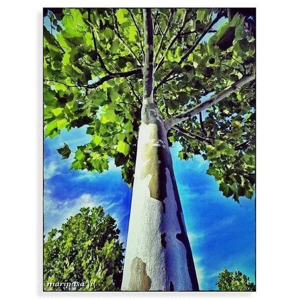 Edit Photograph - Obeisance by Mari Posa