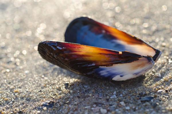 Photograph - Ocean Treasure by Margaret Pitcher
