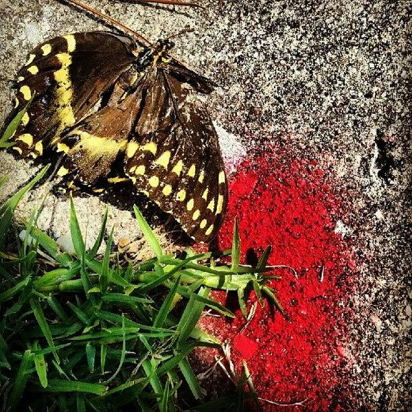 Death Wall Art - Photograph - Ohlordjesus!a Butterfly Commited by Herlan Blissett-patrick