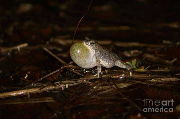 Photograph - Okavango Mini Toad by Mareko Marciniak