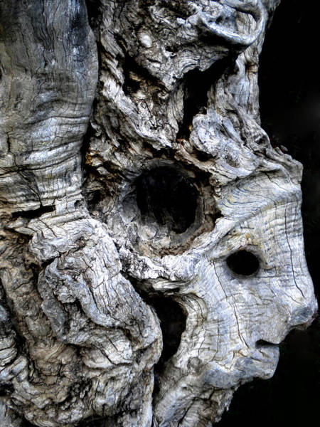 Photograph - Old Ancient Olive Tree Spain by Colette V Hera  Guggenheim