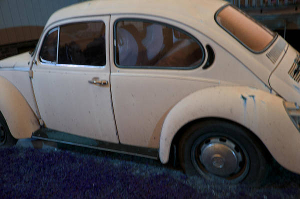 Wall Art - Photograph - Old Bug by Affini Woodley
