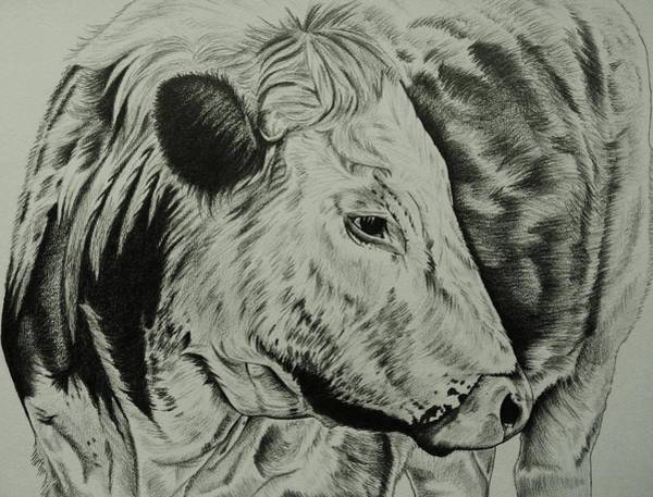Furry Drawing - Old English Longhorn Study by Lucy Deane