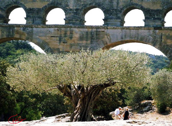 Photograph - Old Olive Tree Under The Pond De Gard France by Colette V Hera  Guggenheim
