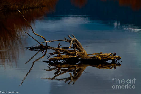 Truckee River Photograph - Old River Snag by Mitch Shindelbower