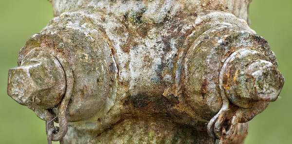 Water Hydrant Photograph - Old Rusty Fire Plug by Brian Mollenkopf