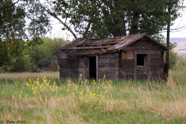 Photograph - Old Shed by C Sitton