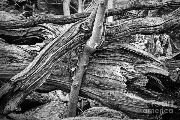 Photograph - Old Wood by Lutz Baar