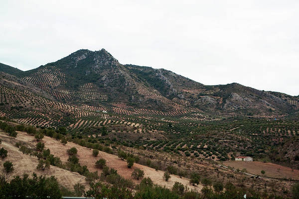 Photograph - Olive Oil Mountain by Lorraine Devon Wilke
