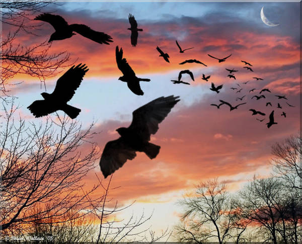 Sfx Photograph - Omen Silhouette by Brian Wallace