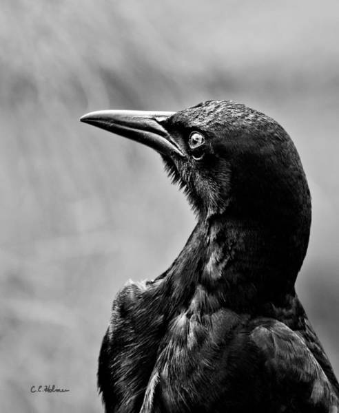 Photograph - On Alert - Bw by Christopher Holmes