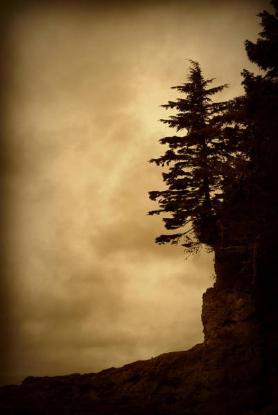 Photograph - On The Edge Of The Bluff by Marilyn Wilson