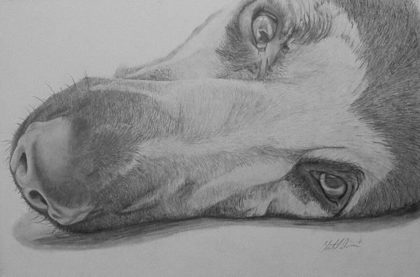 German Shepherd Drawing - On The Floor Argo by Chantal Davies