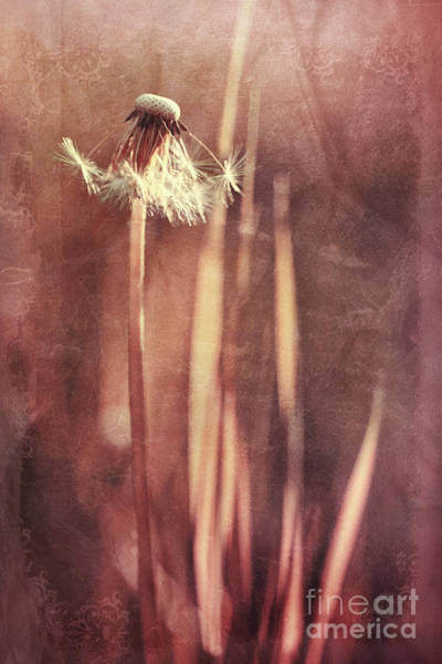 Wall Art - Photograph - Once Upon A Time by Priska Wettstein