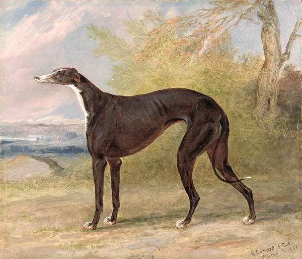 Racers Painting - One Of George Lane Fox's Winning  by George Garrard