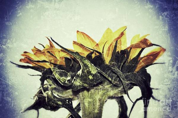 Photograph - One Sun by Traci Cottingham
