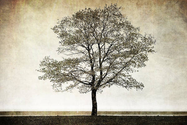 Photograph - One Tree by Milena Ilieva