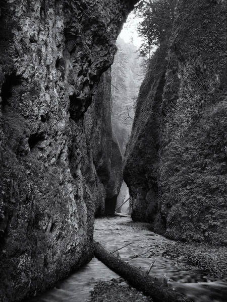 Photograph - Oneonta Gorge by Jon Ares