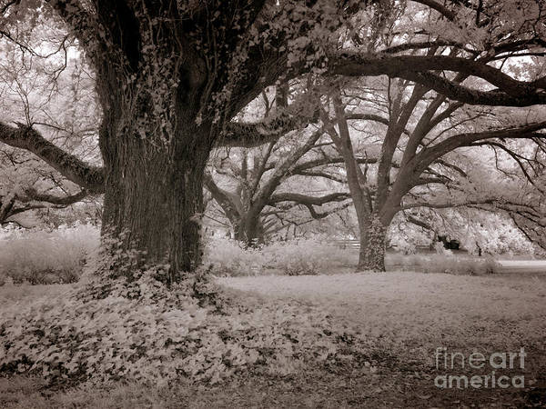 Wall Art - Photograph - Only God Can Make Trees  by Heinz G Mielke