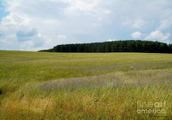 Wall Art - Photograph - Open Fields by Pauline Ross