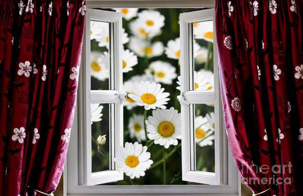 Window Dressing Wall Art - Photograph - Open Windows Onto Large Daisies by Simon Bratt Photography LRPS